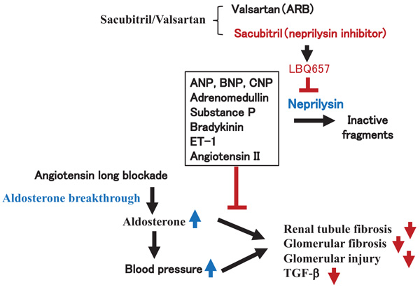 Inhibition of Renal Fibrosis and Glomerular Injury by